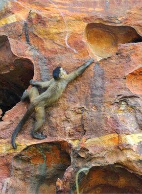 La fauna del Parque Nacional Siete Ciudades en Brasil