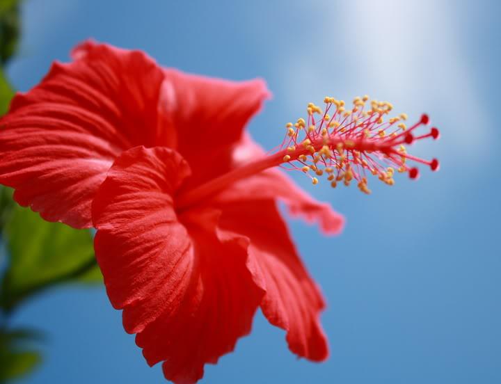 WW Bunga Raya