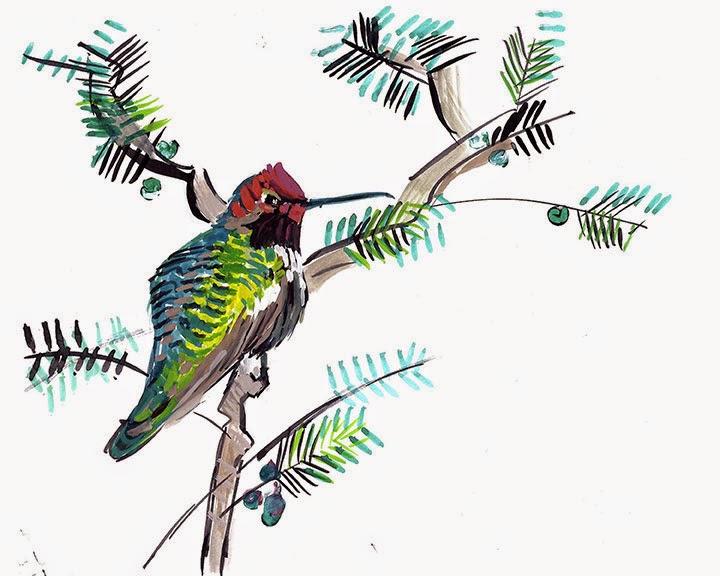 Ana Hummingbird, Male by Char Fitzpatrick