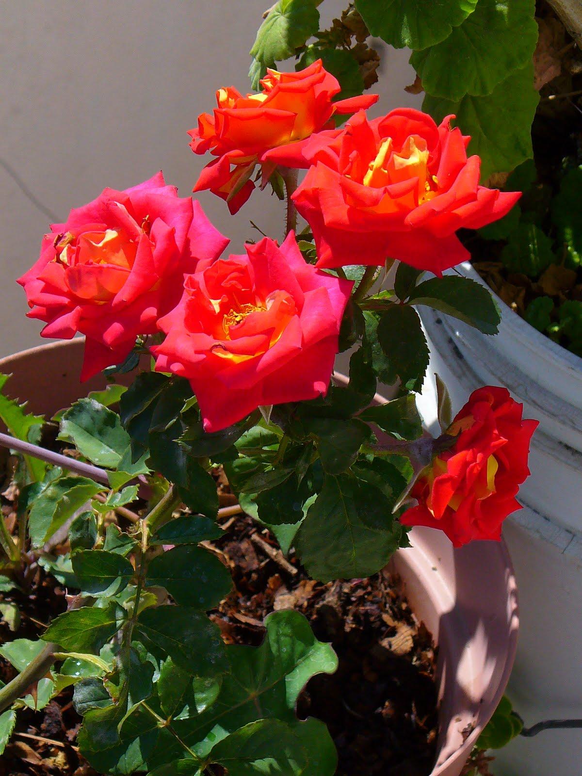 Poesia adios mi jardin querido for Adios jardin querido