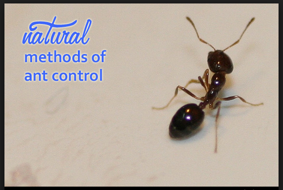NATURAL PEST CONTROL METHODS FOR ANTS