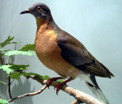 Extinct species revival raises hopes, fears