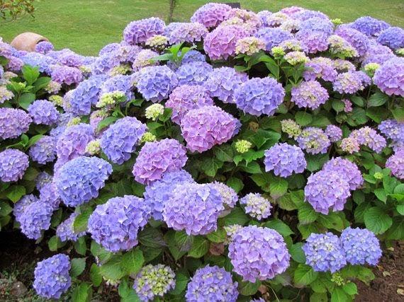 Garden sopelana mundo verde jardinarium quieres for Hortensias cultivo y cuidados