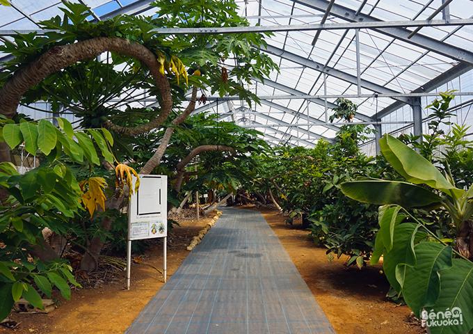 Utopia farm, Miyakojima, Okinawa