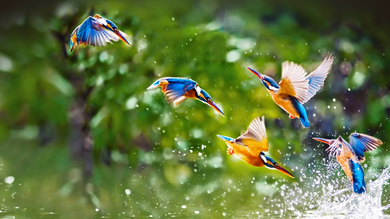 Kingfishers, Taipei, Taiwan (© htu/Flickr Select/Getty Images) 219