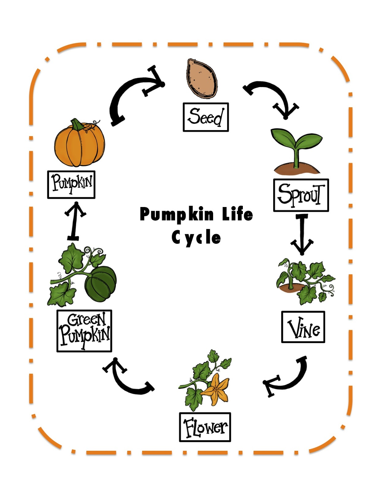 Agile image with regard to life cycle of a pumpkin printable