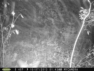 Deer hunting in massachusetts