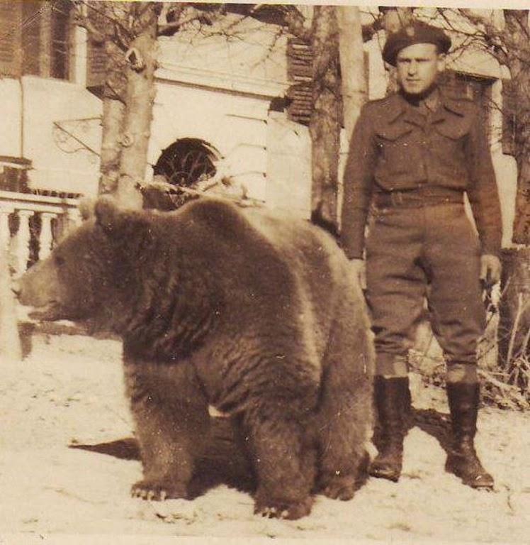 Niedźwiedź Wojtek