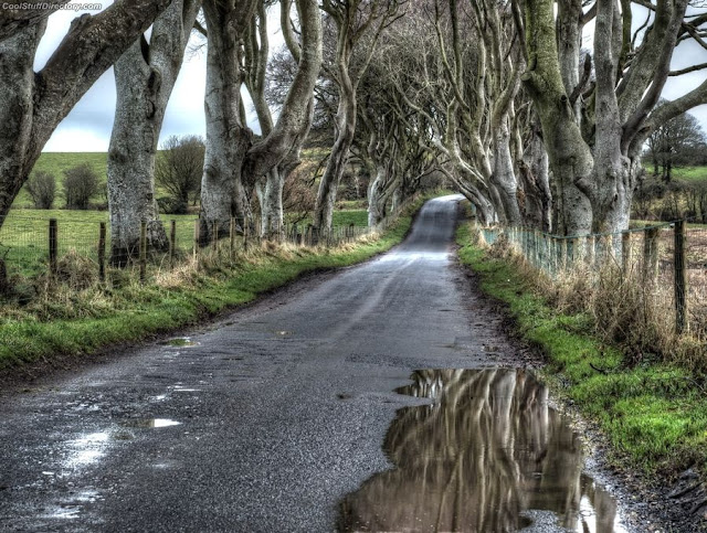 13. The Dark Hedges, Antrim by Jase Wickham