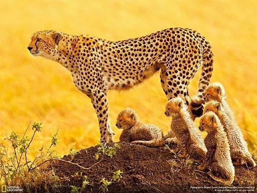 اجمل صور حيوانات صور خيول طيور الفهد