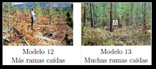 Modelos 12 y 13 según Rothemel.