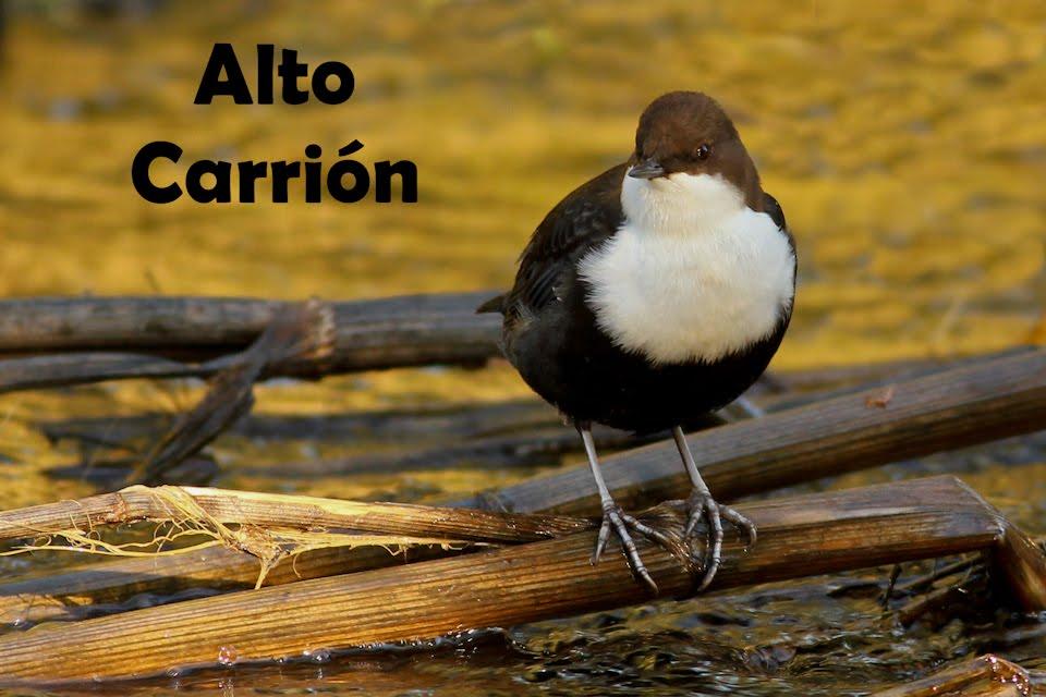 Alto Carrión