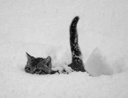 Katze_im_Schnee.JPG