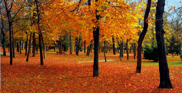 otoño en el Parque del Retiro en Madrid 2