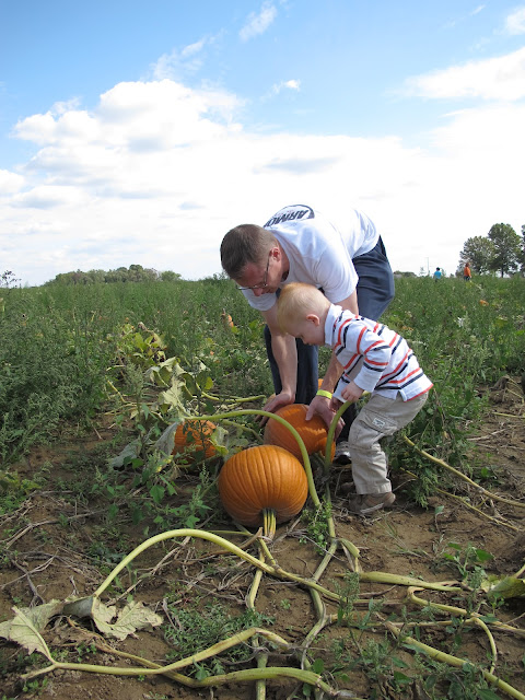 Picking Pumpkins with Daddy