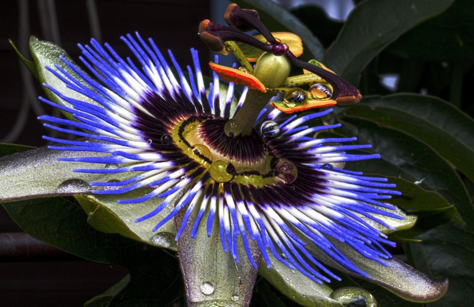 Flor azul sorprendente naturaleza im genes gratis para ti for Naturaleza hermosa