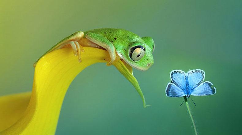 El fascinante mundo de las ranas en macro fotografía por Wil Mijer
