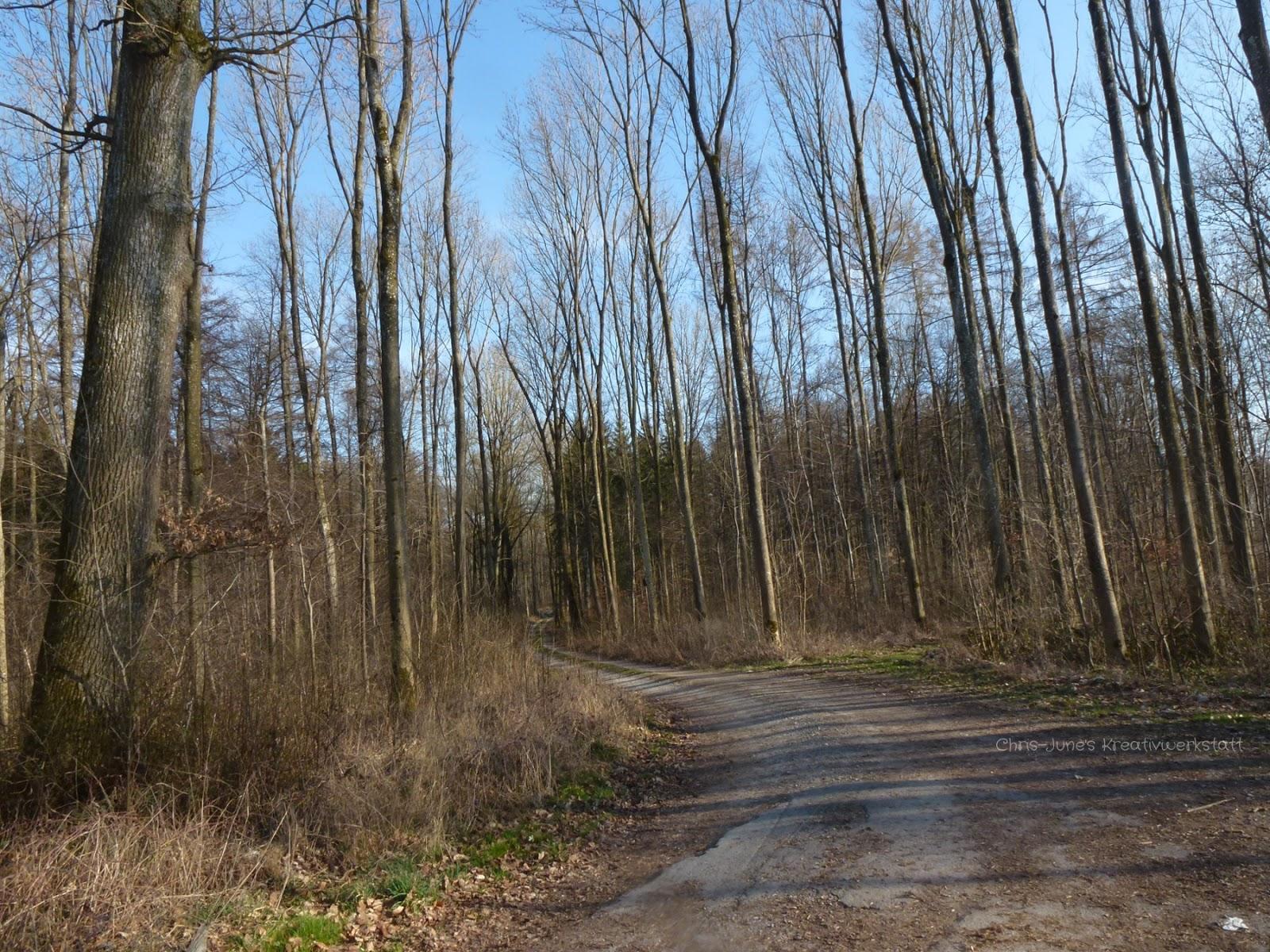 Waldweg März