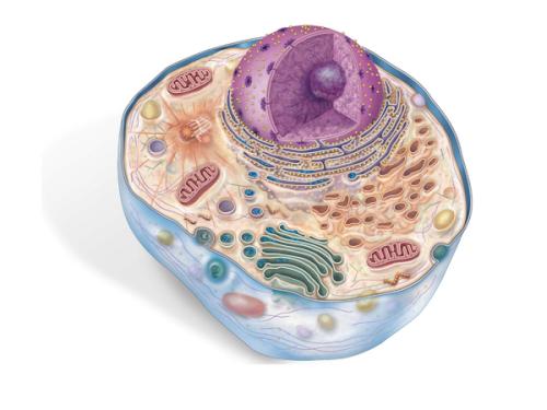 Estrutura celular: Características gerais