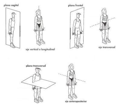 Fisioterapia: La Posición Anatómica, Planimetría y Términos de relación