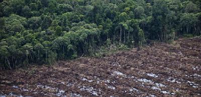 TREES dapat Selamatkan Hutan Hujan