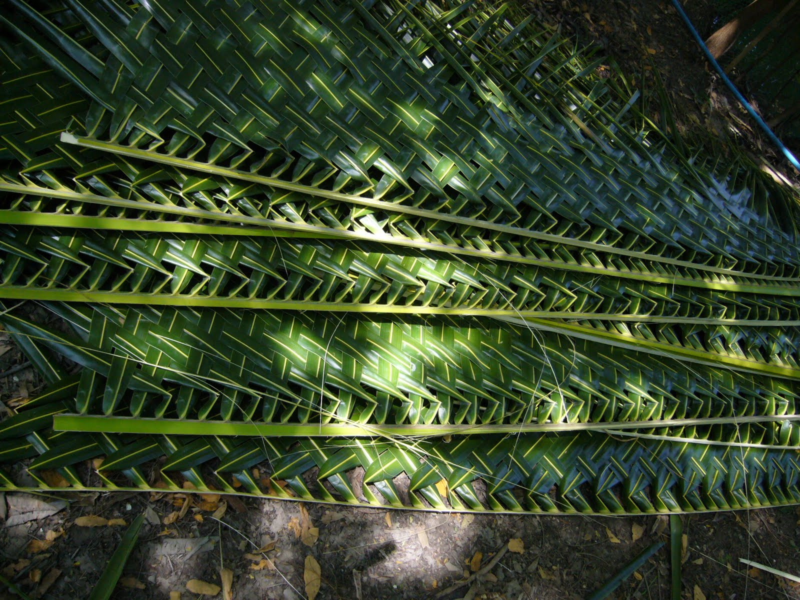How To Weave Palm Fronds Into A Basket : Adventures in sustainability how to make a hen nesting