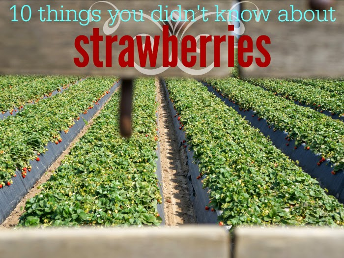 10 things you didn't know about strawberries // livingmividaloca.com #JustAddStrawberries
