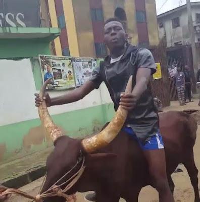 Comedian Akpororo riding his cow to Warri,Akpororo on a cow,Akpororo rides a cow,Akpororo and cow 6