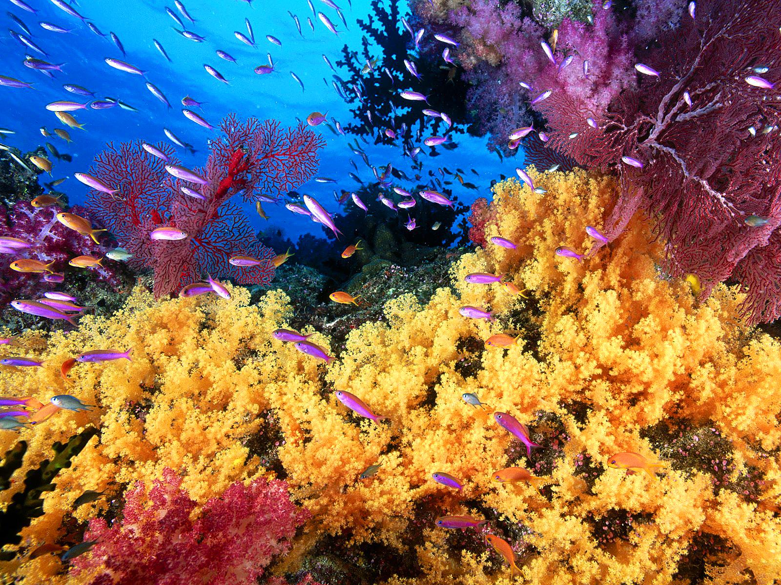 coral reef life fish wallpapers beautiful desktop