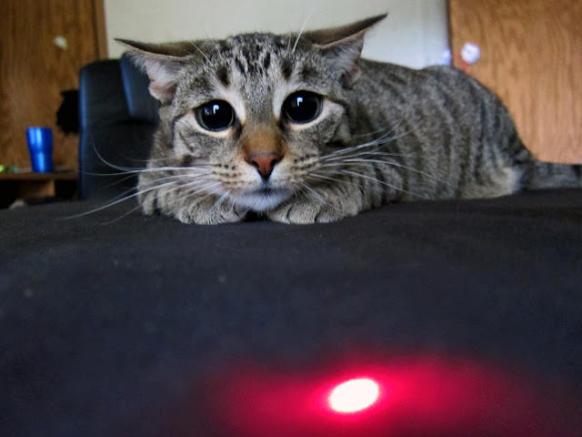 cat loves red dot, funny cat photos