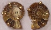 Ammonite Clip-On Button Earrings