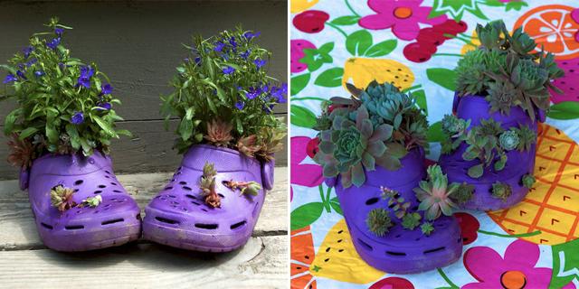 Sandálias Crocs reutilizadas como vasos de jardins