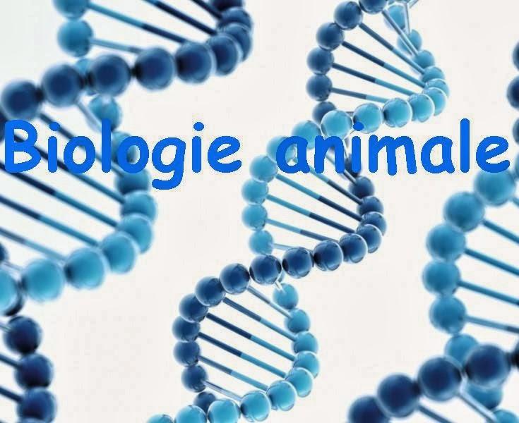cours de biologie animale  s3