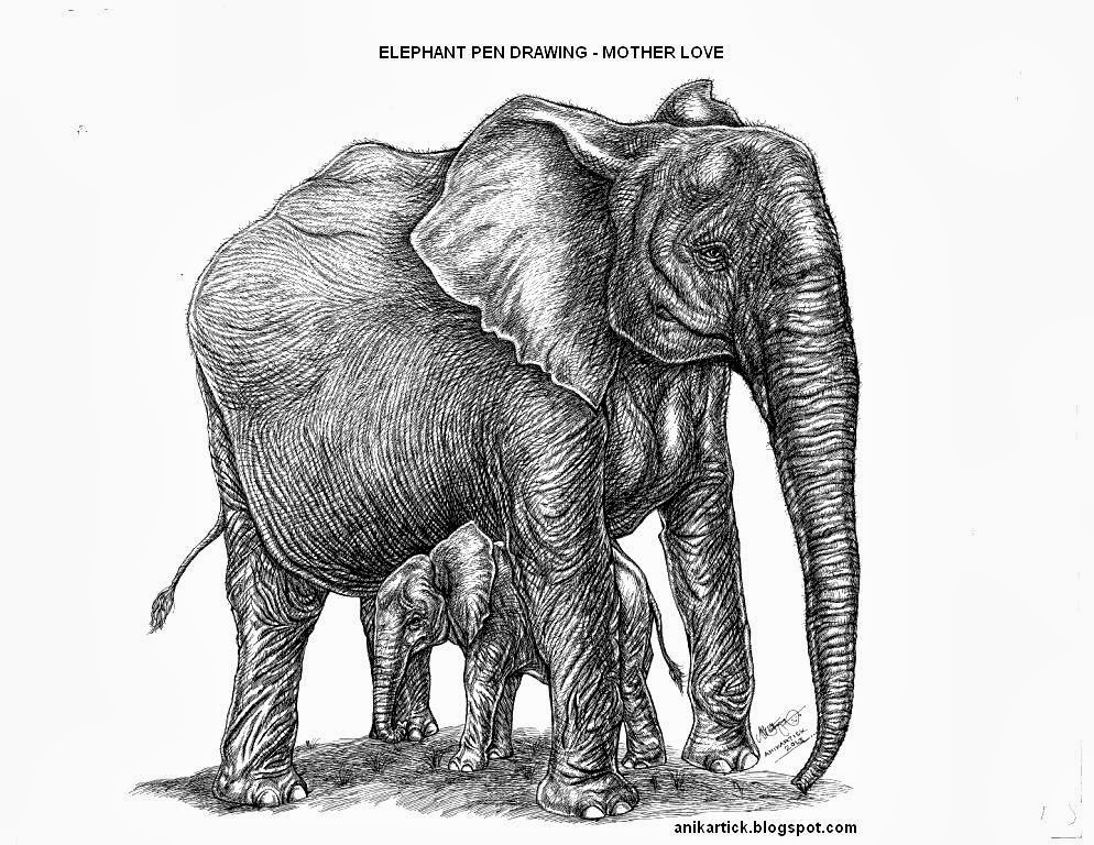 Pen Drawing Artist: Pen drawings - Elephant drawings ... Realistic Elephant Drawing
