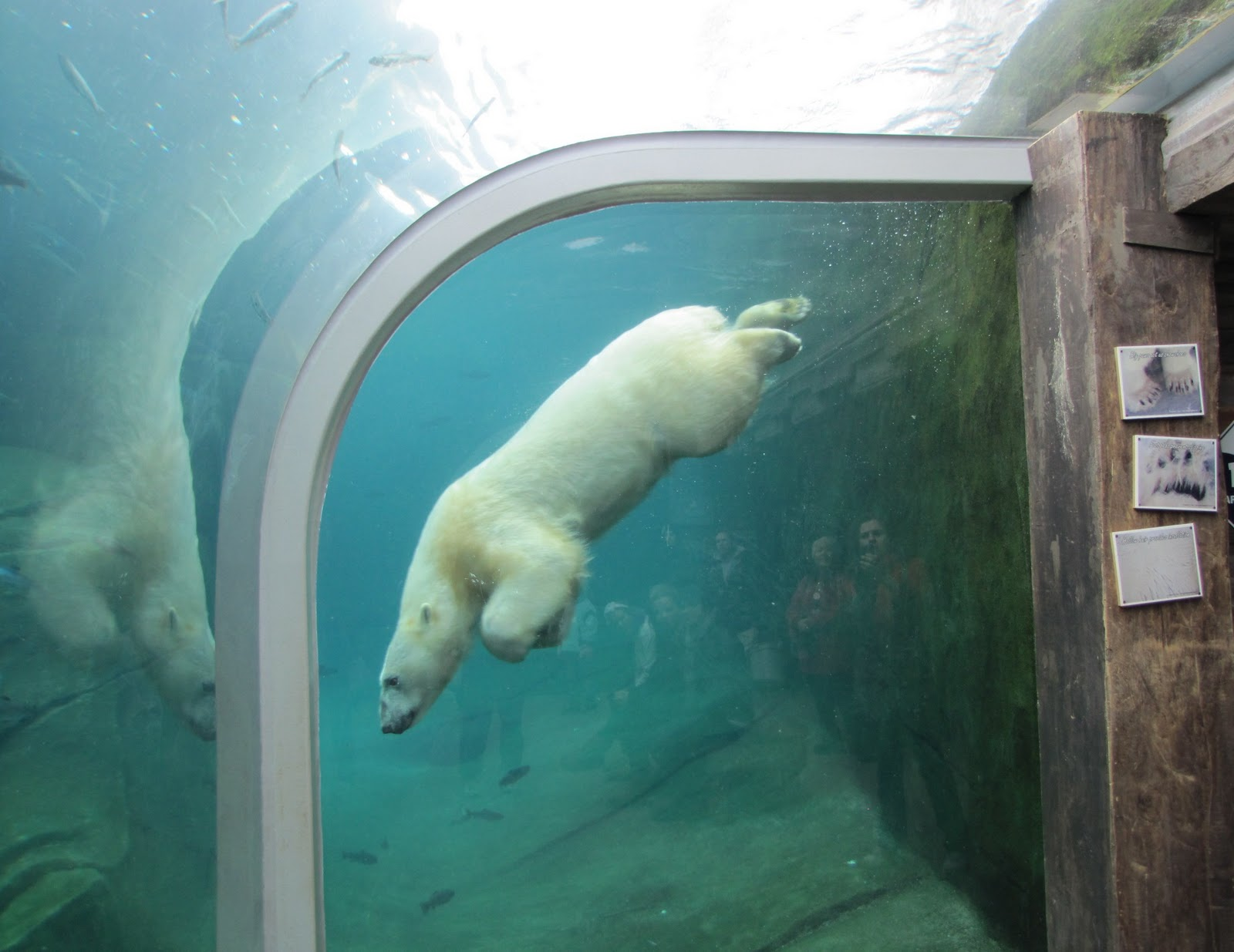 Polar Bear Zoo Habitat Www Pixshark Com Images