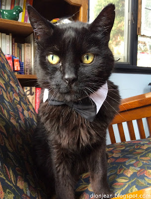 Troy the cat in his bow tie