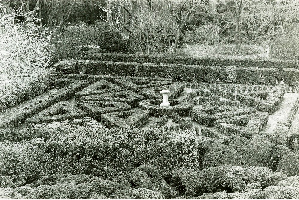 Shovel ready knot garden restoration underway tudor place for Tudor knot garden designs