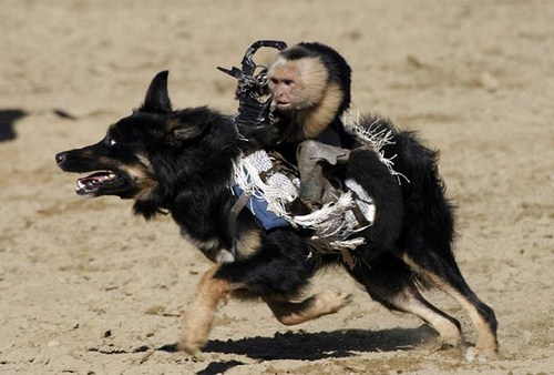 Monkey Ride On Dog Seen On www.coolpicturegallery.us