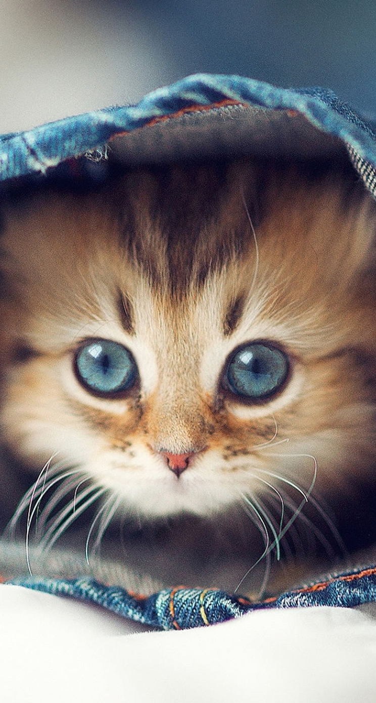 cute cat wallpaper for iphone free download | iphone wallpapers and