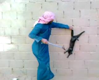 رجل يعذب قطة بطريقة بشعة!