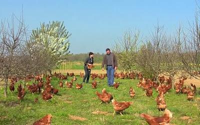 Bouillons de cultures les bienfaits des oeufs for Prix des poules pondeuses