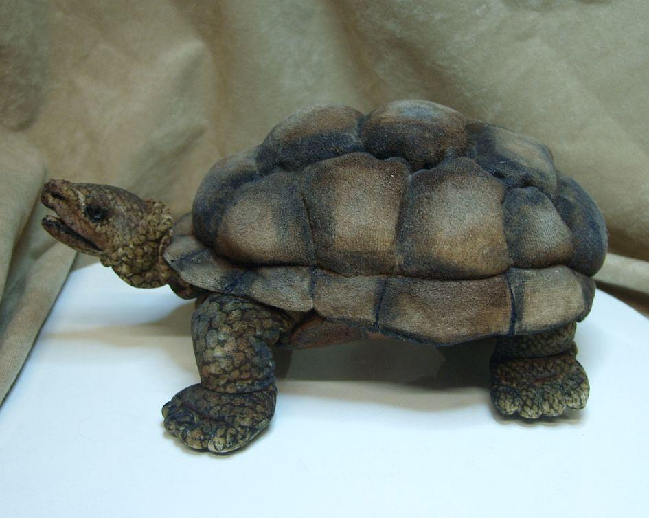 FurryCritters und Co: Schildkröte