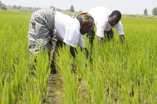 Como a energia solar está trazendo segurança alimentar para a África