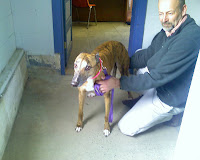 Girly Girl greyhound adoption day