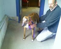 Girly Girl greyhound adoption day