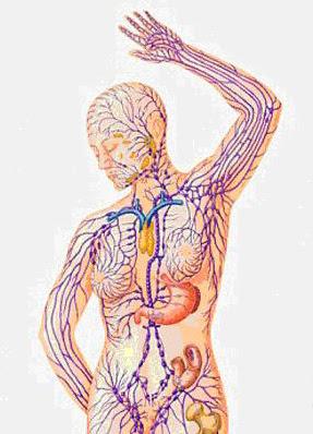 cancer i lymfsystemet