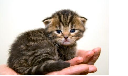 Taking Care Of Newborn Kittens
