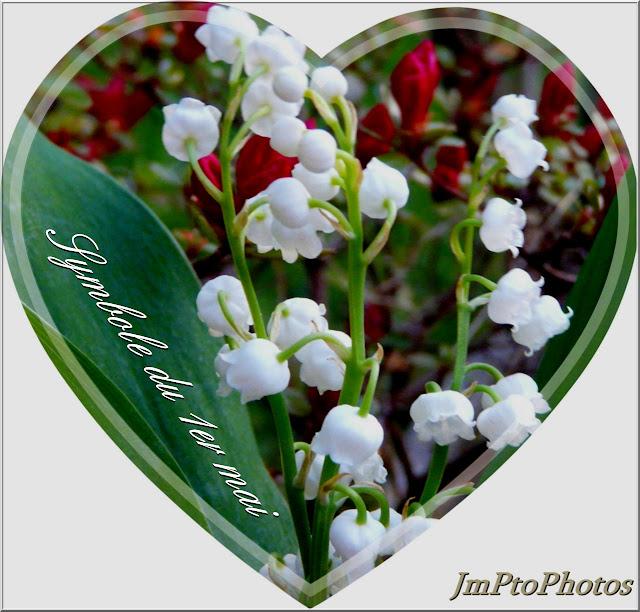Jmptophotos muguet bonheur - Photo muguet 1 mai ...