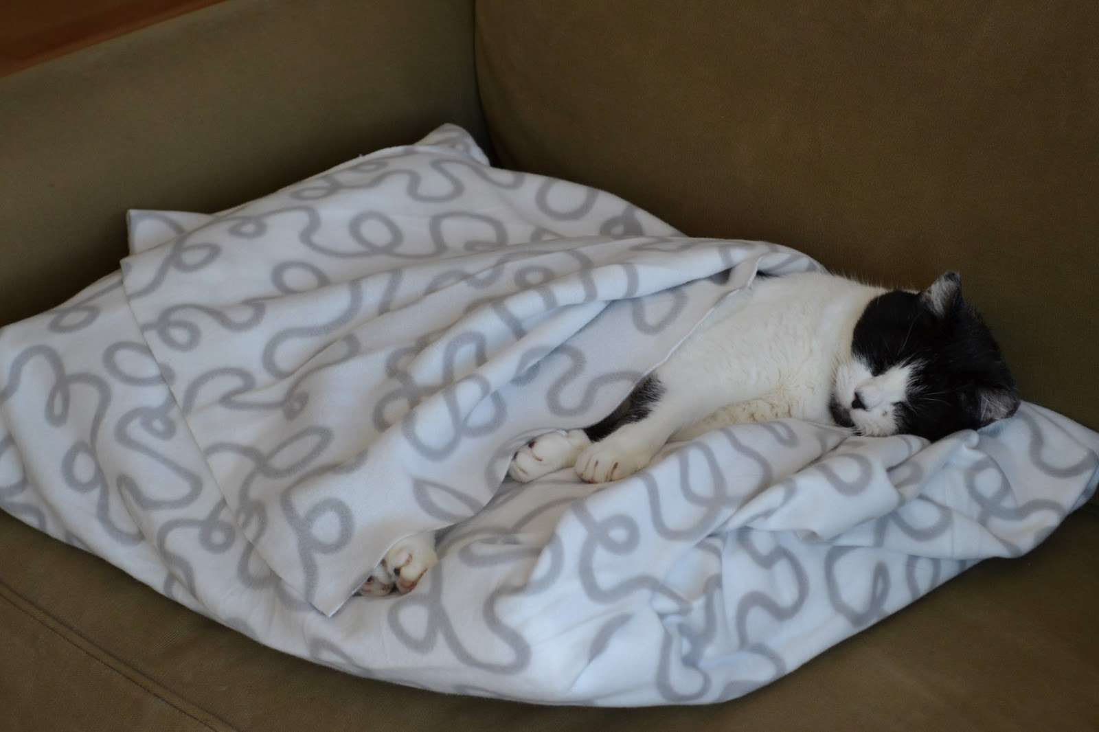 Diy cat bed for home and travel washable for Homemade cat bed