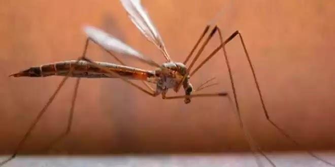 Αυξάνονται τα κρούσματα ελονοσίας στην Ελλάδα με την εισβολή ορδών λαθρο! άπλα το αποσιωπούν!